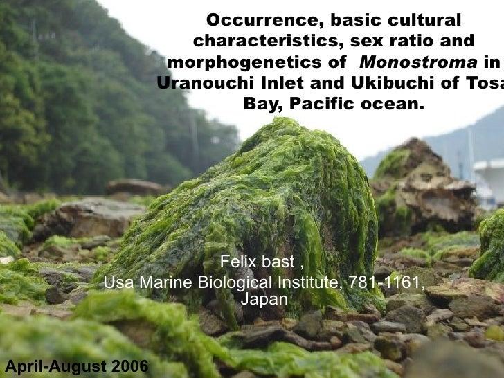 Occurrence, basic cultural characteristics, sex ratio and morphogenetics of  Monostroma  in Uranouchi Inlet and Ukibuchi o...