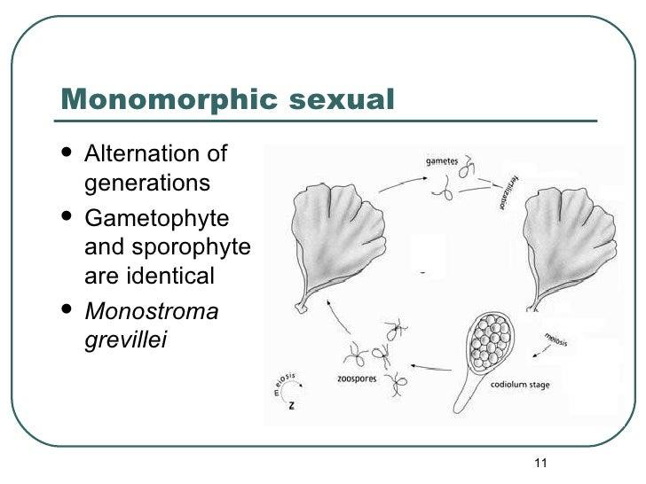 Monomorphic sexual <ul><li>Alternation of generations </li></ul><ul><li>Gametophyte and sporophyte are identical </li></ul...
