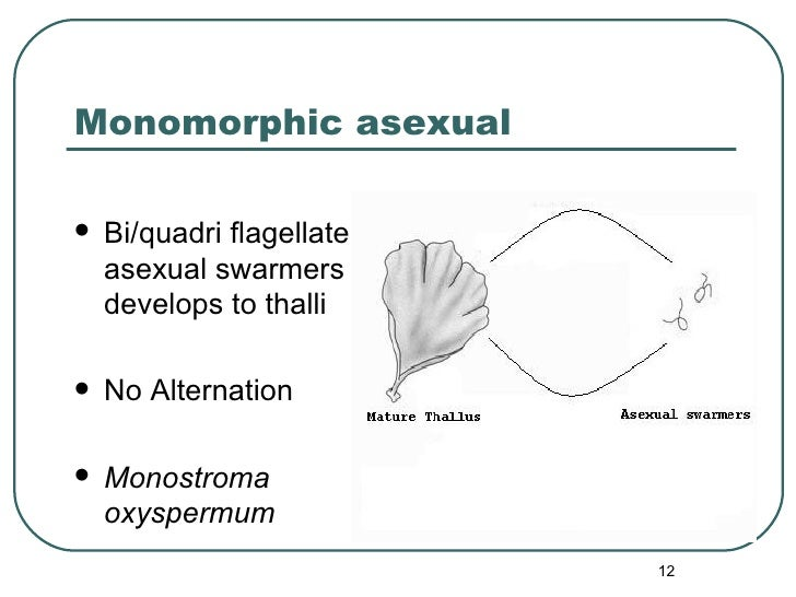 Monomorphic asexual <ul><li>Bi/quadri flagellate asexual swarmers develops to thalli </li></ul><ul><li>No Alternation </li...