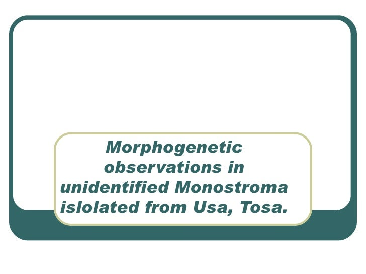 Morphogenetic observations in unidentified Monostroma islolated from Usa, Tosa.