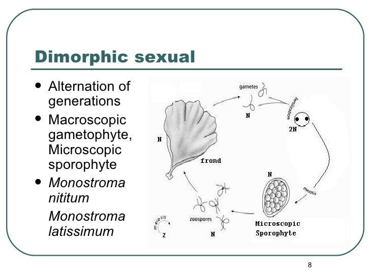 Dimorphic sexual <ul><li>Alternation of generations </li></ul><ul><li>Macroscopic gametophyte,Microscopic sporophyte </li>...