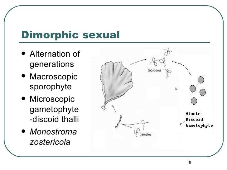 Dimorphic sexual <ul><li>Alternation of generations </li></ul><ul><li>Macroscopic sporophyte </li></ul><ul><li>Microscopic...