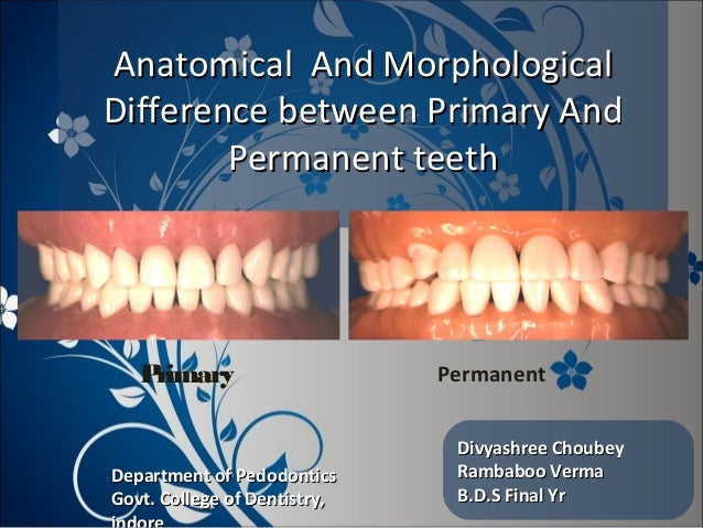 Anatomical And MorphologicalAnatomical And Morphological Difference between Primary AndDifference between Primary And Perm...