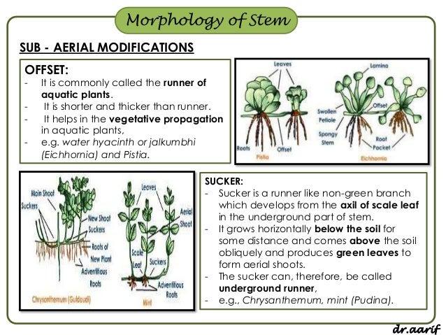 Morphology of flowering plants - I (root, stem & leaf)