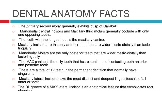 Morphology Of Human Permanent Dentition