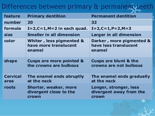 Clinical significance of teeth morphology • Prominent buccal cervical ridge of mand. First molar provide resistance to the...