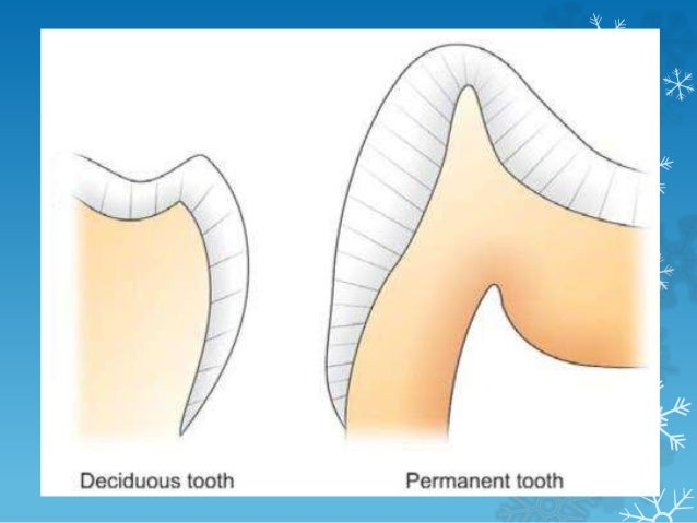 Specific description of each tooth : • Maxillary Central Incisor • Only tooth that has a greater mesiodistal width than he...