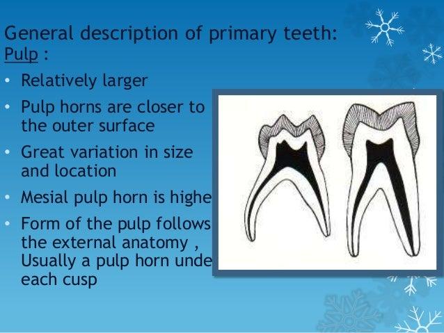 Morphology Of Primary Teeth