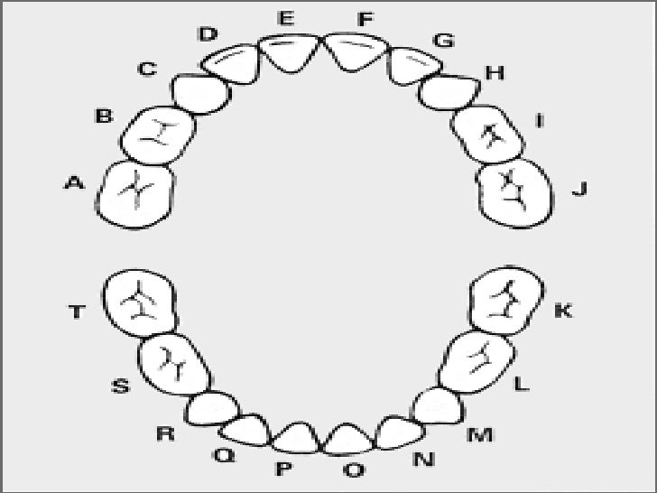 Morphology of primary teeth pedodontics ccuart Gallery
