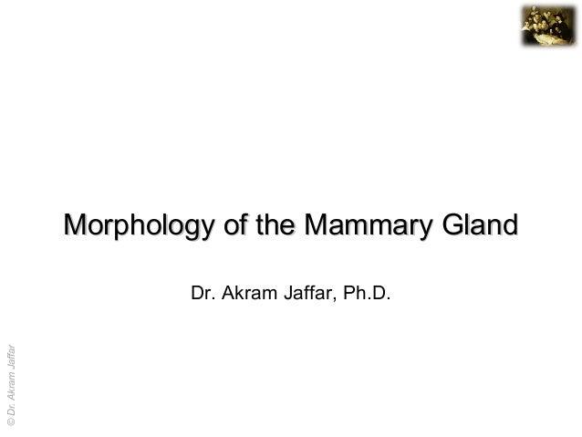 Morphology of the Mammary Gland                             Dr. Akram Jaffar, Ph.D.© Dr. Akram Jaffar                     ...