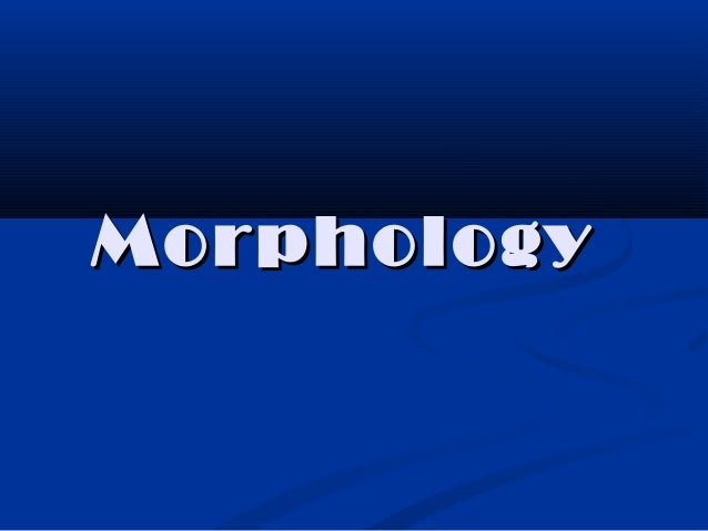 MorphologyMorphology