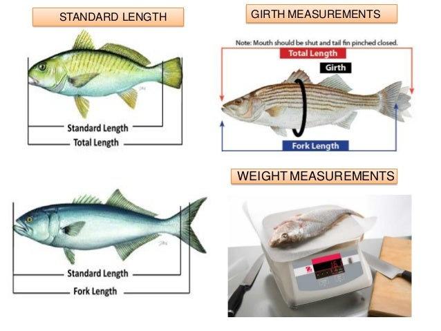 Morphometric measurements condition indexing and for Fish weight by length chart