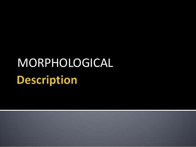 MORPHOLOGICAL