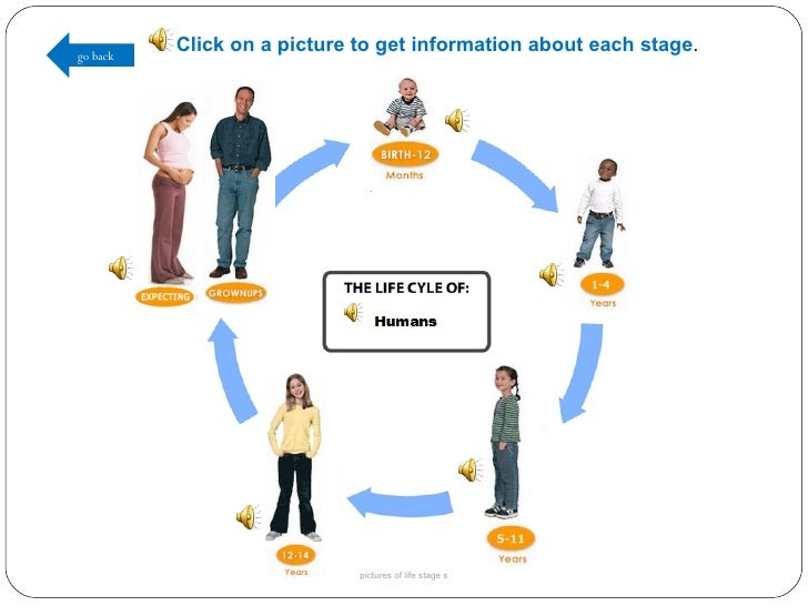Pictures Of The Human Life Cycle 28