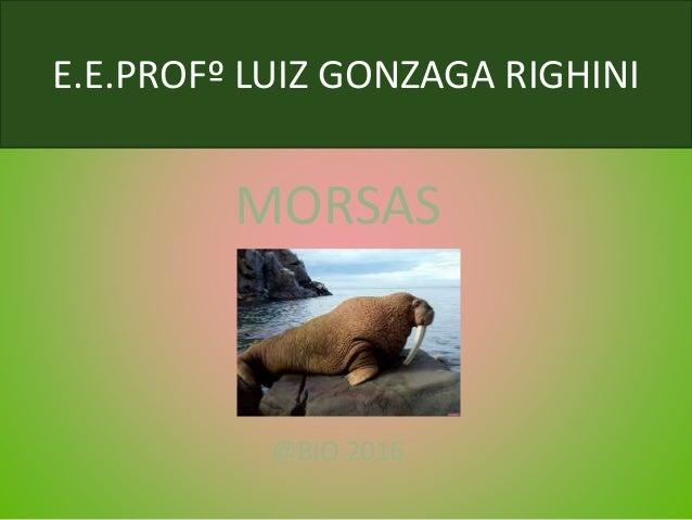 E.E.PROFº LUIZ GONZAGA RIGHINI MORSAS @BIO 2016