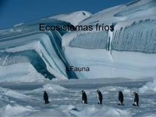 Ecosistemas fríos      Fauna