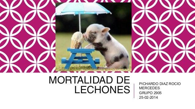 MORTALIDAD DE LECHONES  PICHARDO DIAZ ROCIO MERCEDES GRUPO 2905 25-02-2014