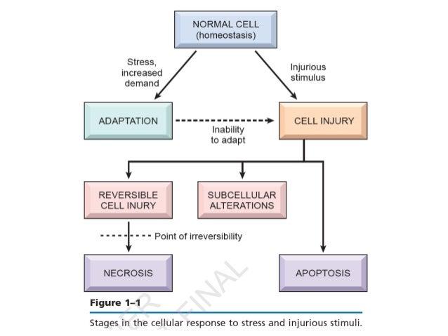 Adaptação celular
