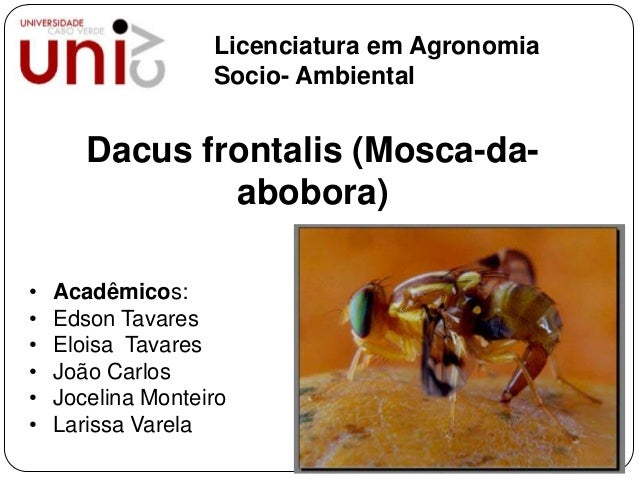 Licenciatura em Agronomia Socio- Ambiental  Dacus frontalis (Mosca-daabobora) • • • • • •  Acadêmicos: Edson Tavares Elois...