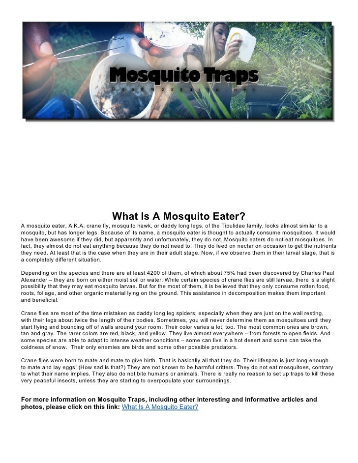 What Is A Mosquito Eater?A mosquito eater, A.K.A. crane fly, mosquito hawk, or daddy long legs, of the Tipulidae family, l...