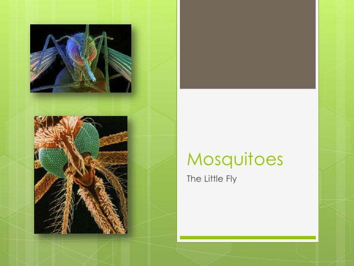 Mosquitoes<br />The Little Fly<br />