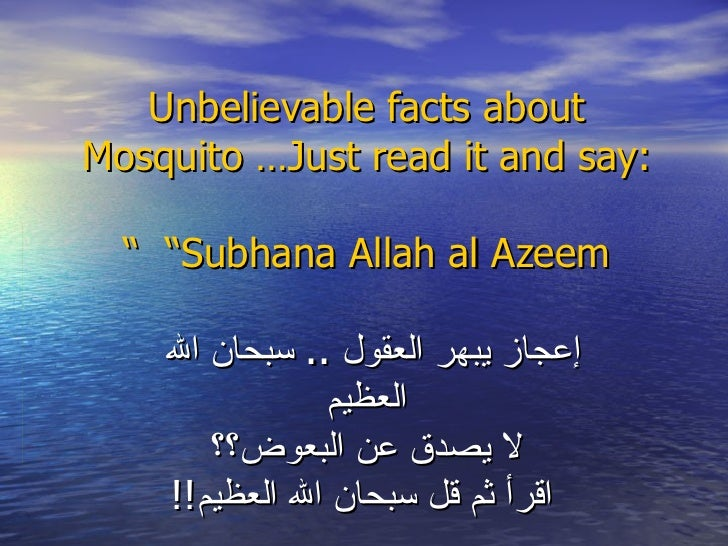 """Unbelievable facts about Mosquito …Just read it and say:   """"Subhana Allah al Azeem """" إعجاز يبهر العقول  ..  سبحان الله   ا..."""