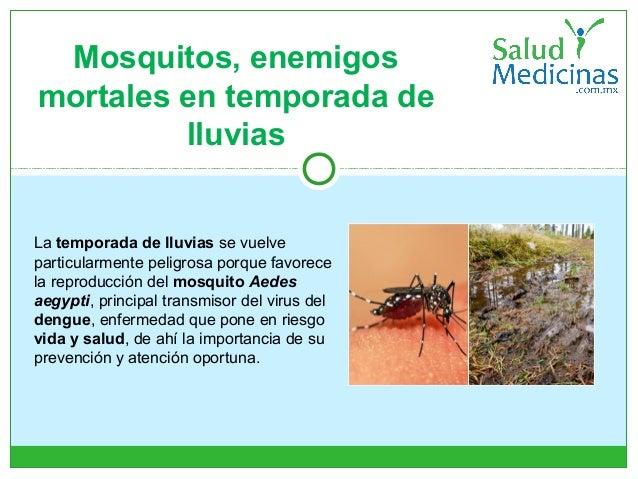 Mosquitos, enemigos mortales en temporada de lluvias La temporada de lluvias se vuelve particularmente peligrosa porque fa...