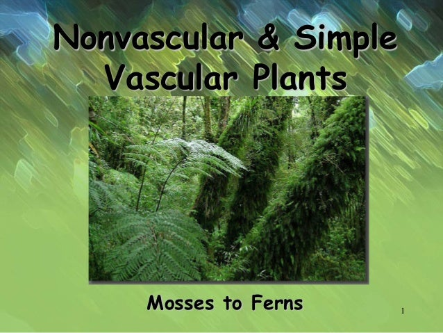 Nonvascular & Simple Vascular Plants Mosses to Ferns 1