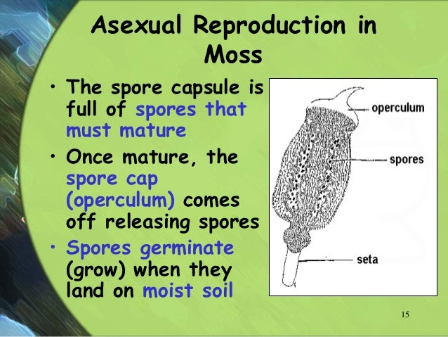 Asexual reproduction in plants spore formation in moss
