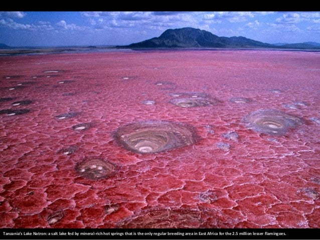 Tanzania's Lake Natron: a salt lake fed by mineral-rich hot springs that is the only regular breeding area in East Africa ...
