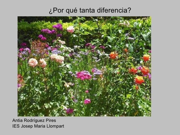 ¿Por qué tanta diferencia? <ul><li>Antia Rodríguez Pires </li></ul><ul><li>IES Josep Maria Llompart </li></ul>