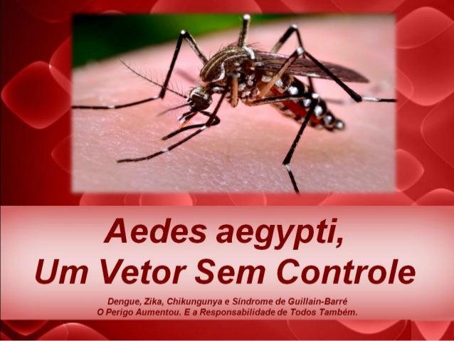Aedes aegypti Gênero: Aedes. Aedesaegypti;http://www.drbayma.com Filo: Arthropoda Classe: Hexapoda Ordem: Diptera Família:...