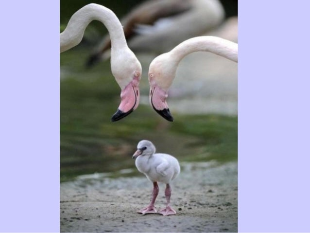 Mother's love l'amour d'une mére