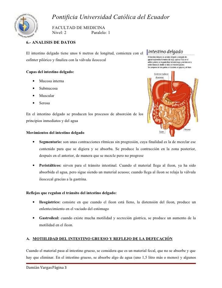 Motilidad intestinal