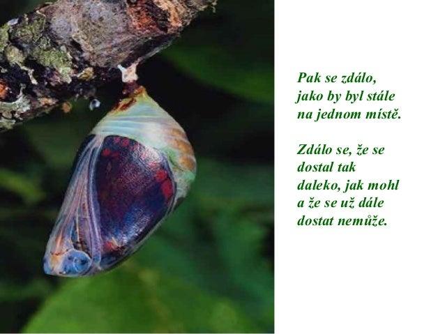 Motýl Slide 2