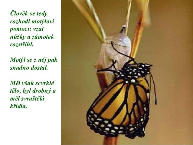 Motýl Slide 3