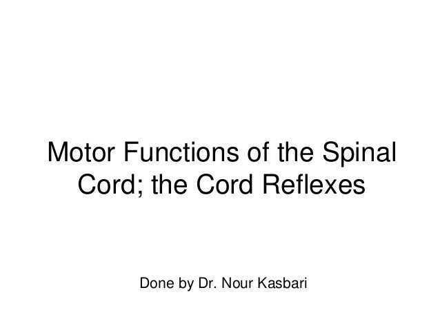 Motor Functions of the Spinal Cord; the Cord Reflexes Done by Dr. Nour Kasbari