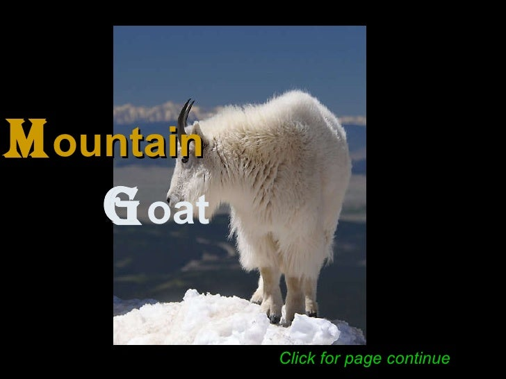 M ountain   G oat   Click for page continue