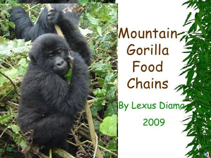 Mountain Gorilla Food Chains By Lexus Diama 2009