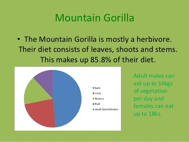What Can the Diet of Gorillas Tell Us About a Healthy Diet for Humans?