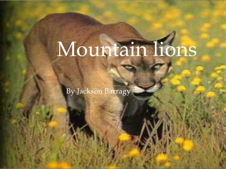 Mountain lionsBy Jackson Barragy