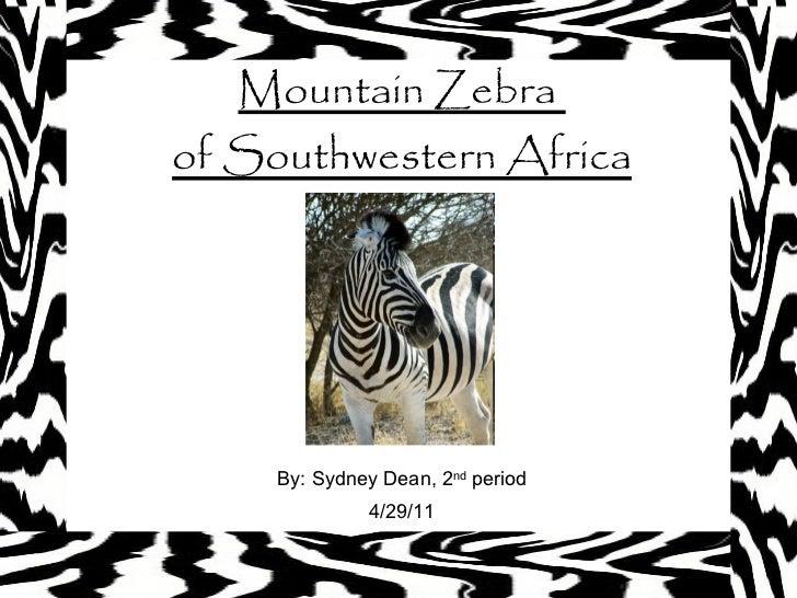 Mountain Zebra  of Southwestern Africa By: Sydney Dean, 2 nd  period 4/29/11