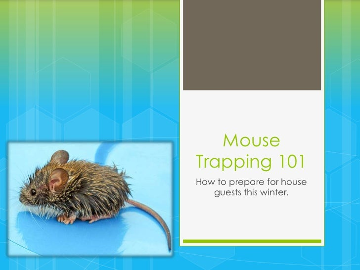 MouseTrapping 101How to prepare for house   guests this winter.