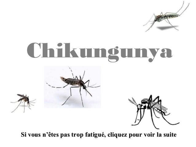 Chikungunya Si vous n'êtes pas trop fatigué, cliquez pour voir la suiteSi vous n'êtes pas trop fatigué, cliquez pour voir ...