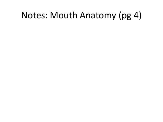 Notes: Mouth Anatomy (pg 4)