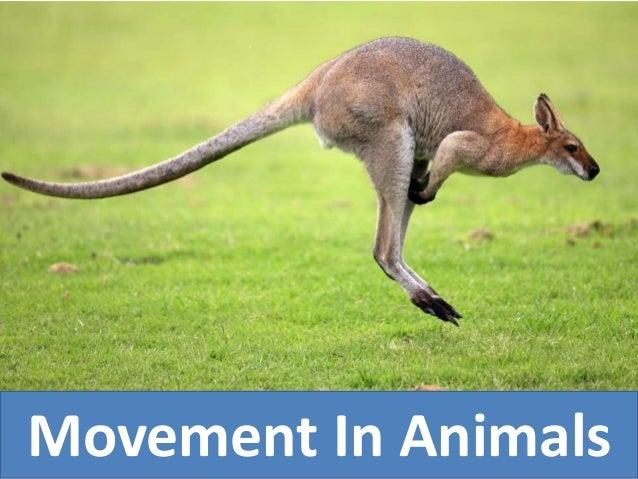 Movement In Animals