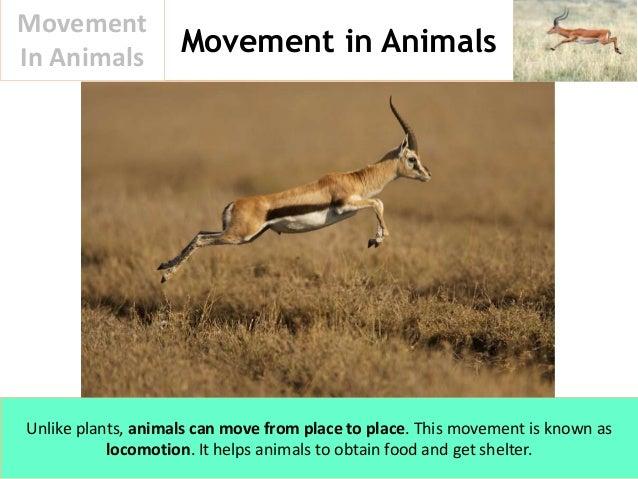 Movement In Animals Slide 2