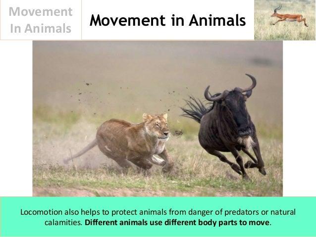 Movement In Animals Slide 3