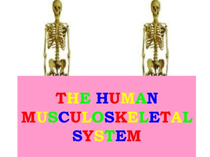 THE HUMANMUSCULOSKELETAL    SYSTEM