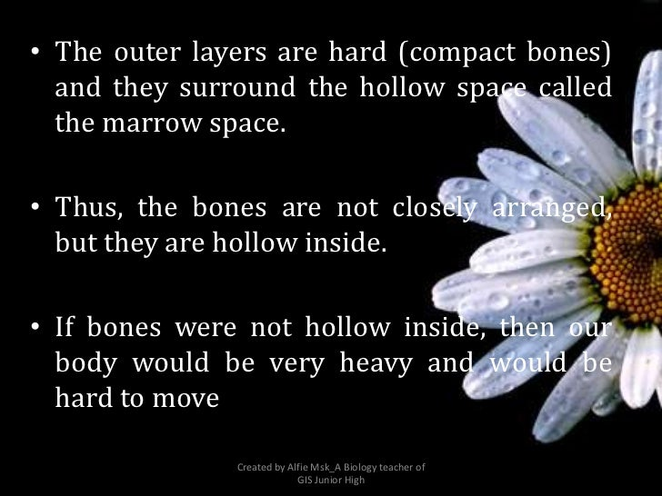 • The outer layers are hard (compact bones)  and they surround the hollow space called  the marrow space.• Thus, the bones...